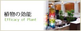 植物の効能